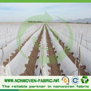 Spunbonded Nonwoven Fabric for Tree Cover pictures & photos