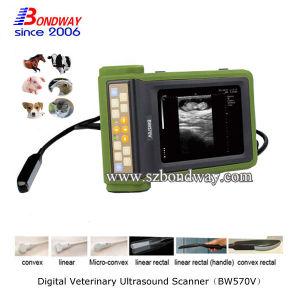 Portable Ultrasound Scanner Veterinay Hospital Medical Equipment