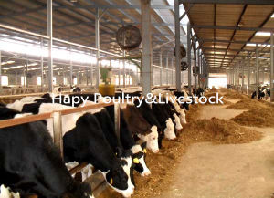 Low Cost Prefab Steel Structure Cattle Farming House pictures & photos