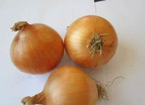 Fresh Yellow Onion with Competitive Price pictures & photos
