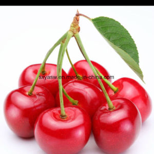 Natural Acerola Cherry Extract with Vitamin pictures & photos