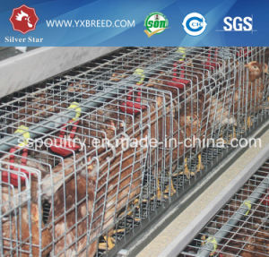 Top Quality Made in China a Type Broiler Battery Cage/ Broiler Rearing Cage pictures & photos