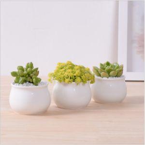 Small Round Ceramic Flowerpotitem Name: Square Ceramic Pot pictures & photos