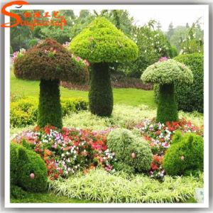 Landscape Decoration Artificial Boxwood Hedge Garden Boxwood Plant pictures & photos