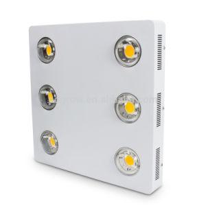 Hot Selling Factory Price Cxb 3590 3500k 6500k COB Full Spectrum LED Grow Lights 600W