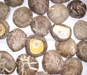 Dehydrated Mushroom (D021)