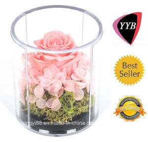 Top Quality Acrylic Round Flower Box pictures & photos