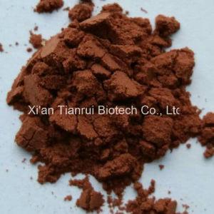 Cacumen Platycladi Extract /Cacumen Platycladi Orientalis P. E pictures & photos