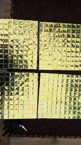 Gold Mosaic Tile Diamond Mirror Mosaic (HD069) pictures & photos