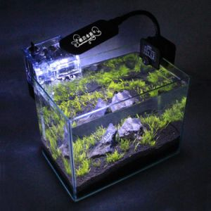 High Quality Middle Size Glass Fish Aquarium Tank pictures & photos