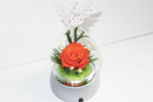 Wedding Gift Preserved Natural Roses pictures & photos
