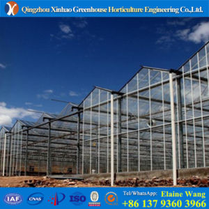 Promotion Quality Assured Glass Multi Span Greenhouse for Roses Growing pictures & photos