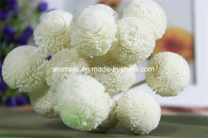 White Chrysanthemum Handmade Sola Wood Flower (SF046) pictures & photos