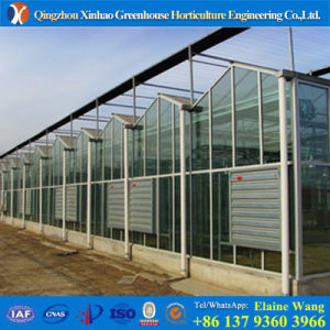 Promotion Glass Hollow Sheet Greenhouse for Rose Farming pictures & photos