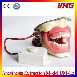 China Dental Products Anesthesia Extraction Model Um-L2 pictures & photos