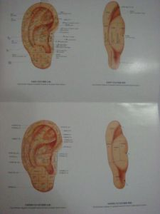 Auricular Point Charts of Acupuncture pictures & photos