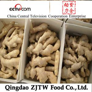 Shandong Ginger 250g Ginger
