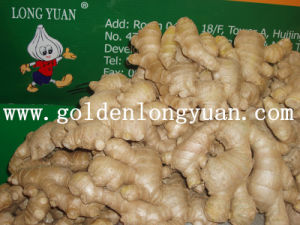 New Crop Whole Air Dry Ginger pictures & photos
