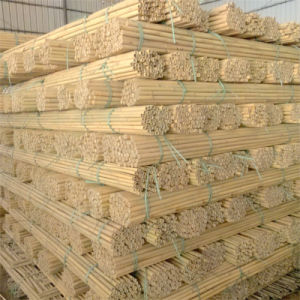 Natural Bamboo Support Apple Tree Growing pictures & photos
