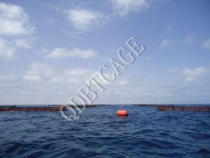Aquaculture Fish Cages for Fish Farming in Volta Lake pictures & photos