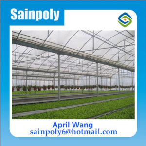 Low Price and Easily Installed Plastic-Film Multi-Span Greenhouse for Hydroponic pictures & photos