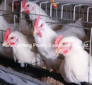 Hot Sale a Type Chicken Layer Cage pictures & photos