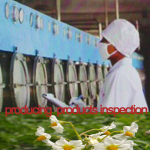Food Potato Starch Factory Manufacture White pictures & photos
