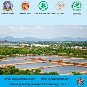 0.5mm Shrimp Farm Geoliner Made of HDPE Sheet pictures & photos