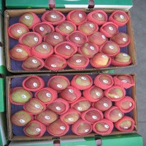 Superior Fresh Yantai Red Star Apple