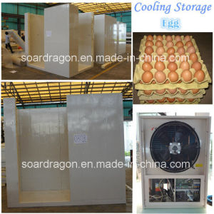 Standard Size Cooling Storage for Egg pictures & photos