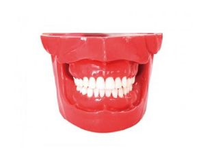 TM-E13 Extraction Model for Dental Teaching pictures & photos