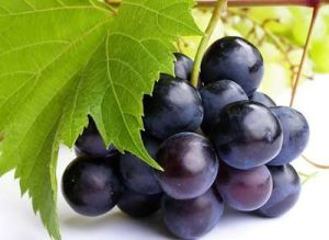 Europe Billberry Extracts with Good Quality and Competitive Price pictures & photos