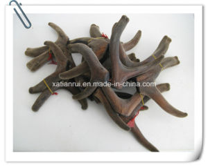 Natural Cornu Cervi Pantotrichum Extract Powder /Pilose Antler/Hairy Antler pictures & photos