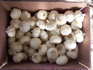 Chinese New Crop Fresh Normal White Garlic pictures & photos