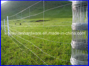 Popular Size High Quality Cattle Fence /Field Fence pictures & photos