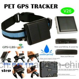 Waterproof IP67 Solar-Powered V26 GPS Tracker for Pets pictures & photos