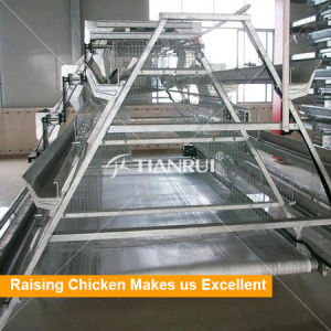 A type chicken cages for egg chickens with scraper manure cleaning system pictures & photos