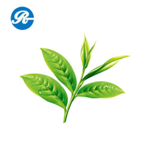 Food Tea Polyphenol for Effectively Prevent The Corruption pictures & photos