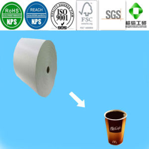 PE Coated Cup Paper with FDA Certificate pictures & photos