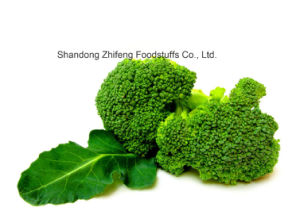 Frozen IQF Broccoli with High Harvest pictures & photos