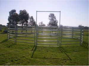Cattle Panel Gate pictures & photos
