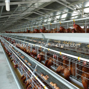 Automtic Chicken Cages for Layer Farm pictures & photos