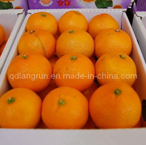 2014 New Crop Navel Orange