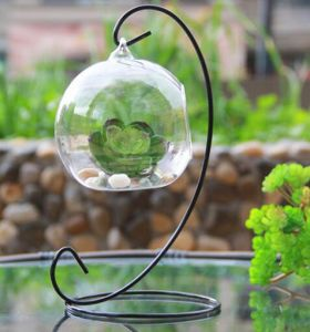 Hanging Glass Vase DIY Planting Hydroponic Plant Flower Container pictures & photos