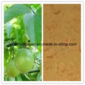100% Natural Passiflora Incarnata Extracts pictures & photos