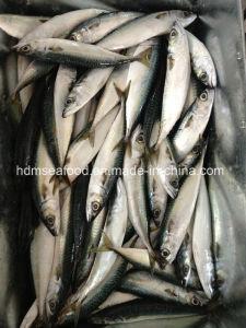 Fresh Frozen Seafood Mackerel Fish pictures & photos