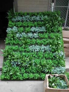 Home Decoration Evergreen Artificial Grass Wall pictures & photos