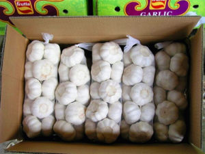 Fresh Chinese White Garlic Supplier 5-6cm up pictures & photos