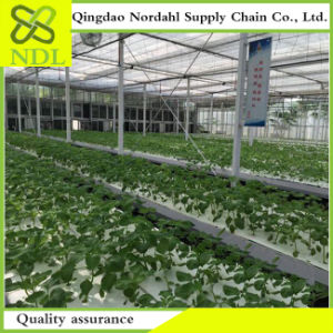 Made in China High Quality Hydroponics System Is Worth Owning pictures & photos