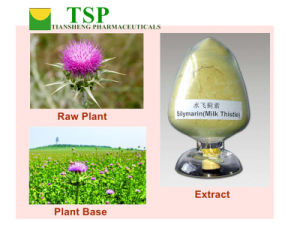 GMP Manufacturer Supply Milk Thistle Extract Liver Health Silymarin pictures & photos